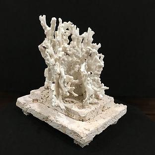 Coral11.JPG