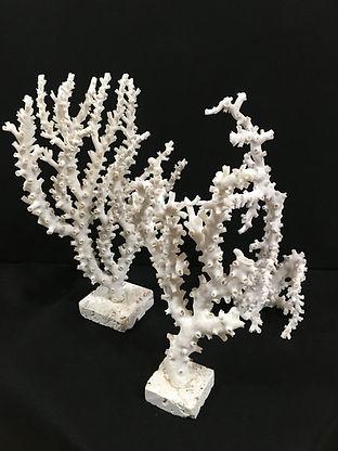 Coral-Octapus.JPG