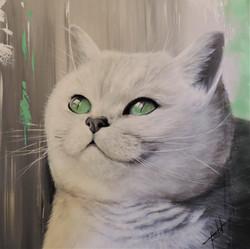 Flora - Chat aux yeux verts
