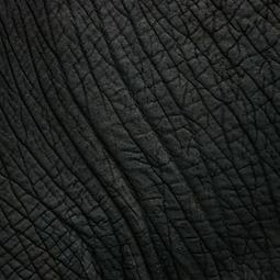 Close up image of elephant skin linking to storytelling page