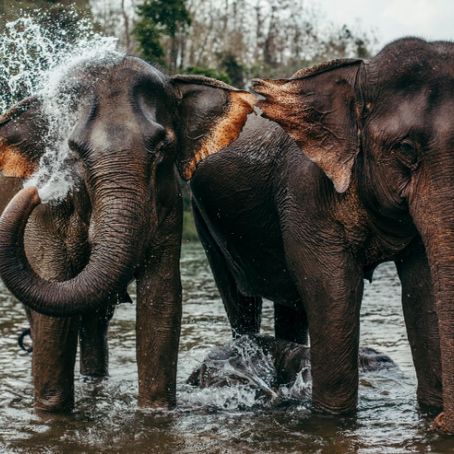 What we can learn from elephants