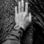 Image of a human hand on elephant skin linking to crisis communications page