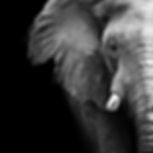 Image of front of an elephant linking to insights page