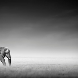 Image of an elephant walking through mist linking to branding page