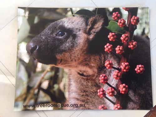 Tree Roo Fridge magnet Mickie