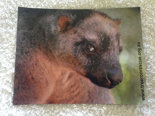 Tree Roo Fridge magnet Billie