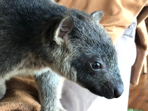 Adoption of Bonnie