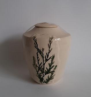 urn tak natuur boom.jpg