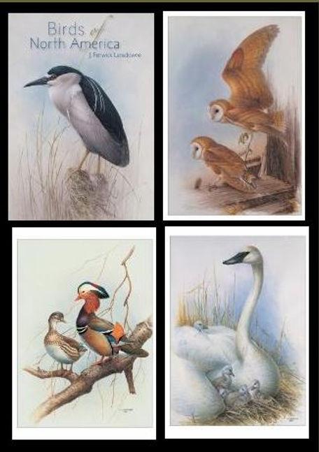Birds of North America J. Fenwick Lansdowne Boxed Notecards