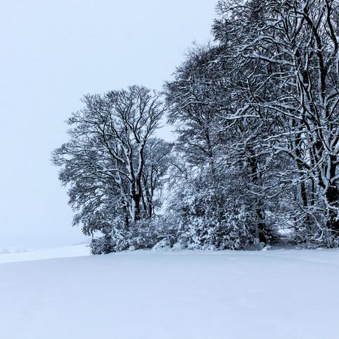 (344) Wood in Snow near Ratho, Edinburgh