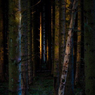 'See The Light' Woodland, Beecraigs Country Park, West Lothian, Scotland