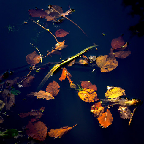 (1182) Autumn Leaves, The Union Canal, H