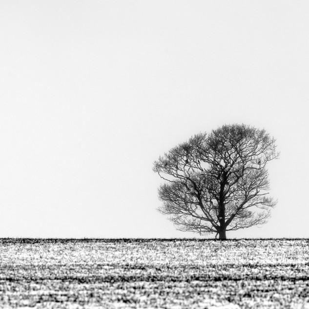 Winter Tree, The Pentlands, Edinburgh, Scotland