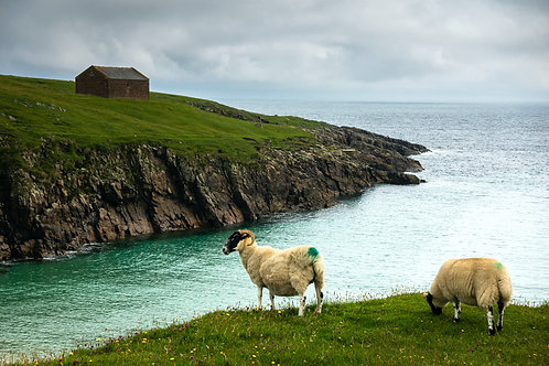 Isle of Lewis, Scotland: Sheep Grazing, Butt of Lewis by David Wheater