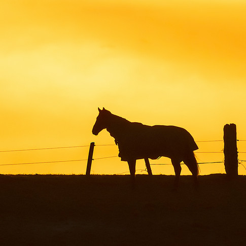 (1359) Horse in Golden Sunset, River Alm