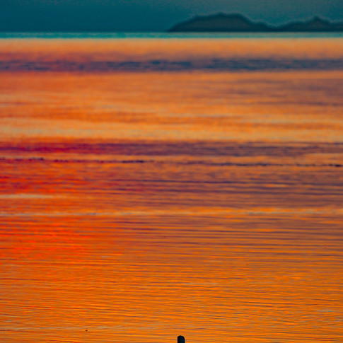 (679) Pair of Swans at Golden Hour, Mina