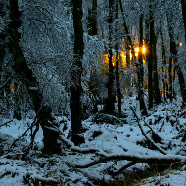 (941) Snow Sunset in Woodland, Harlaw, P