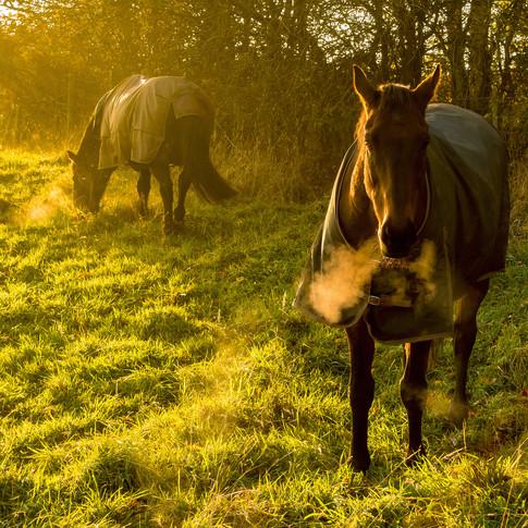 (1001) Horses in Winter Light, Lin's Mil