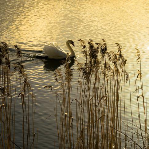 (990) Duddingston Loch, Dr Neil's Garden