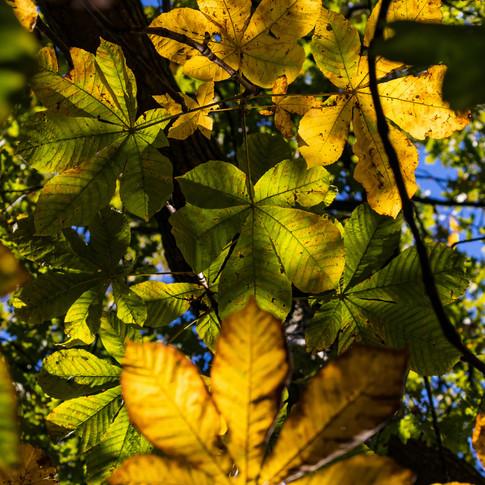 (1171) Autumnal Light Through Trees, Uni