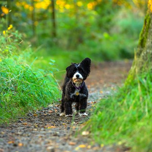 (783) Autumn Walkies, Tormain Hill, Rath