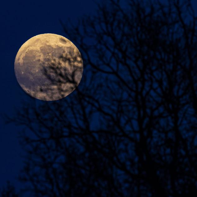 Winter Full Moon Through Trees, Edinburgh, Scotland