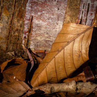 (1502) Autumn Leaf, Lins Mill, West Loth
