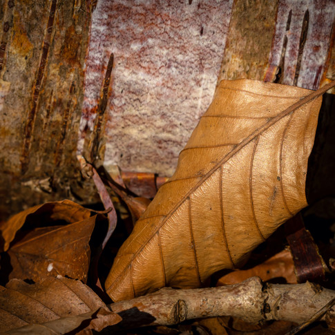 (1502) Autumn Leaf, Lins Mill, West Loth