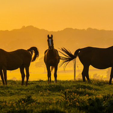 (1395) Three Horses in Setting Sun, Bonn