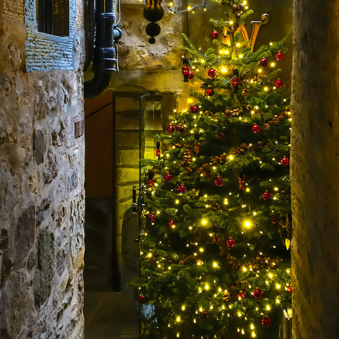 (1200) Jollie's Close, Christmas Tree, C