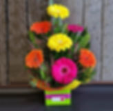 FRONT-FACING-GERBERAS....jpg
