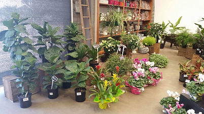 About Us | Functions | The Fresh Flower Market Warrnambool