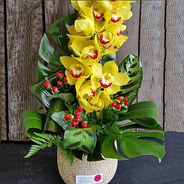 Cymbidium-Orchid-in-Ceramic-Pot.png