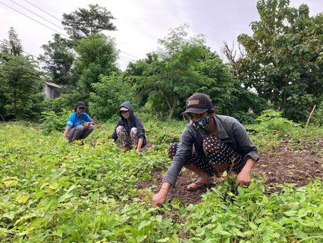 BUKIT FARM PROJECT経過報告