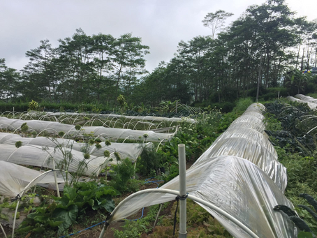 BUKIT FARM PROJECT 経過報告
