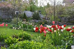 Kevään väriloistoa