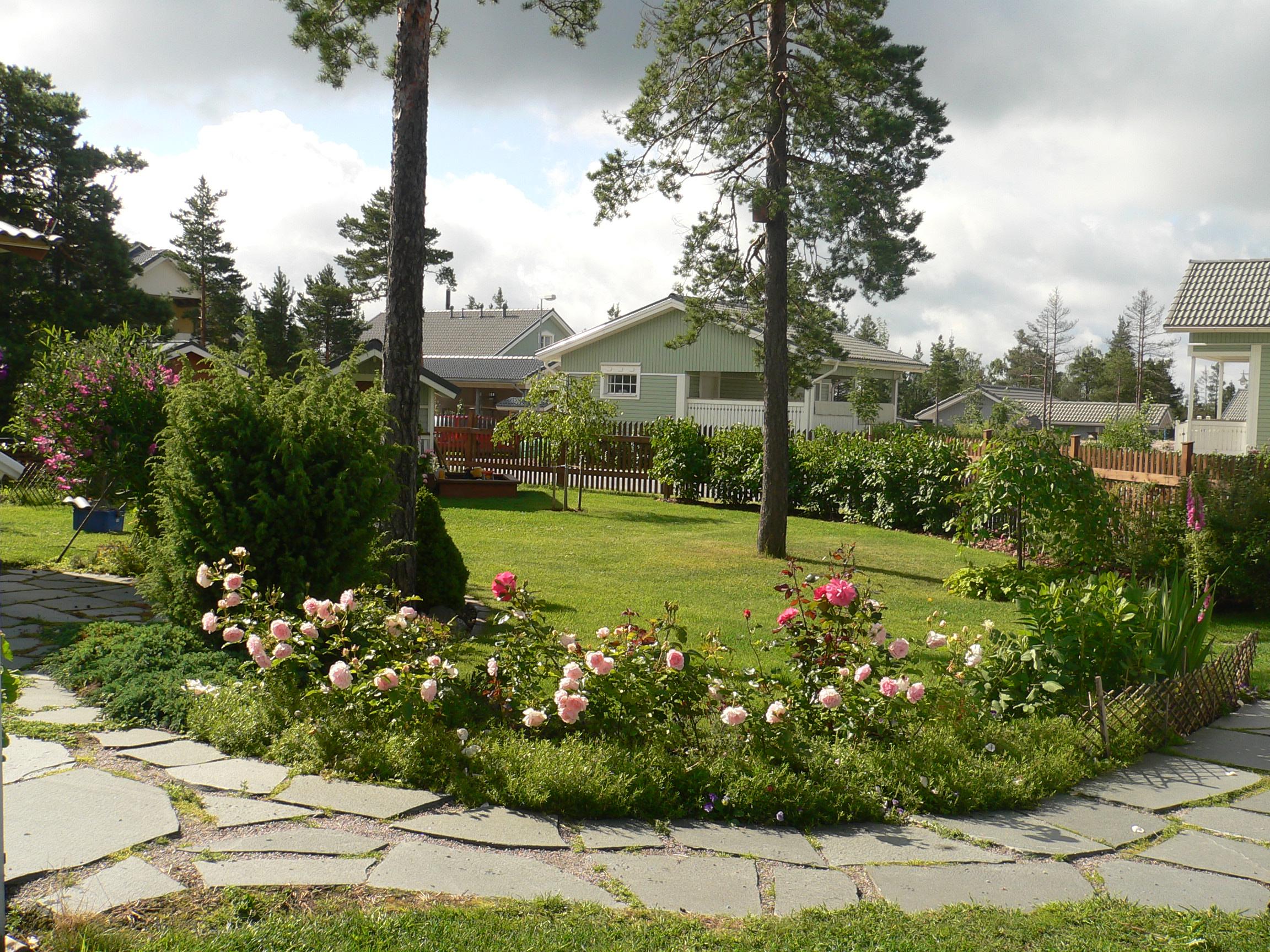 Liuskekivipolku ja Ballade-ruusu