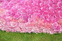 Kukkalaahus - lähikuva