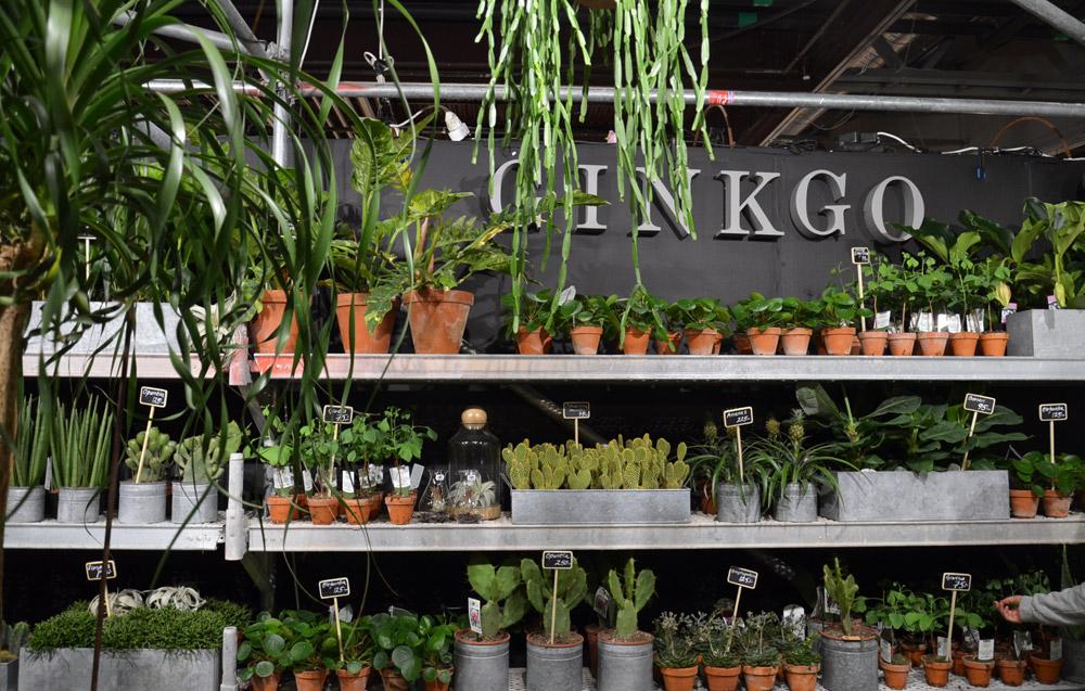 kaktuksia ja kaikkea ihanaa
