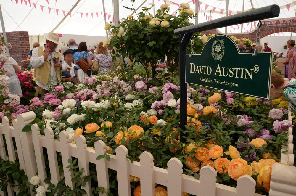 David Austin ruusut