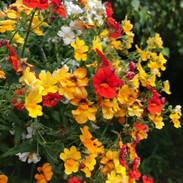 fleur en gardex