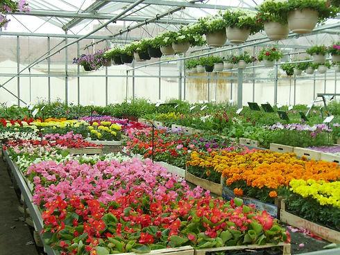 horticulture interieure.jpg