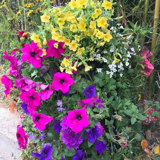 colonne fleurie agrilene