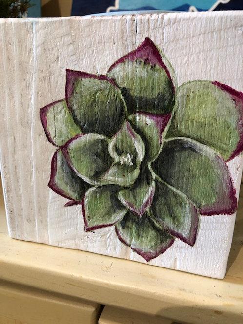 Ikaros Art - Succulent