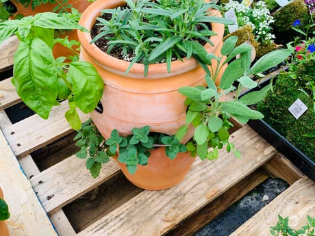 herb container.jpg