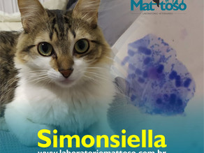 😊A Simonsiella spp.