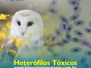 Heterófilos Tóxicos