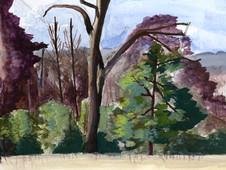 Sydney Woods