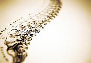 chiropractor berwick, pa