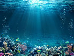 5cac543f48_50151060_ocean-coraux.jpg
